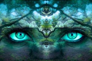 Wahrnehmung - Nele Zimmer