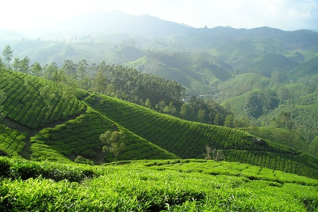 Indische Landschaft